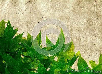 Grunge maple leaves