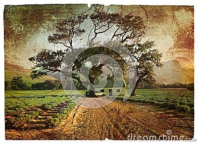 Grunge oak and lavender