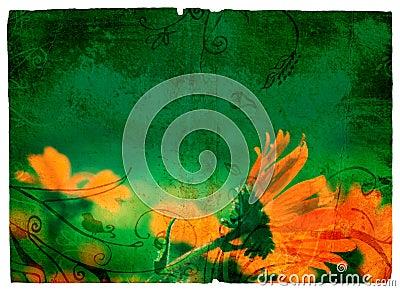 Grunge orange daisy
