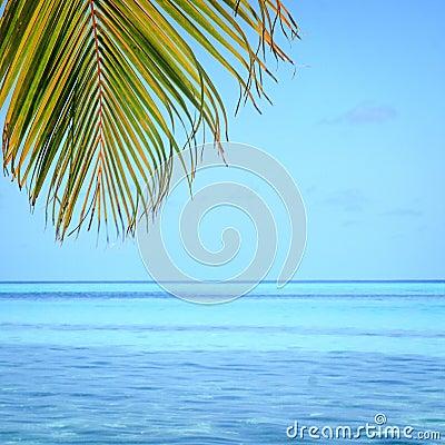 Free Grunge Palm Background Royalty Free Stock Photo - 37538015