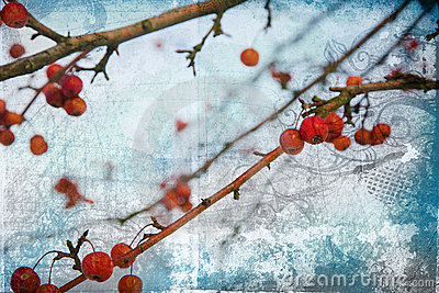 Grunge red berries on blue