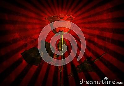 Grunge red rose