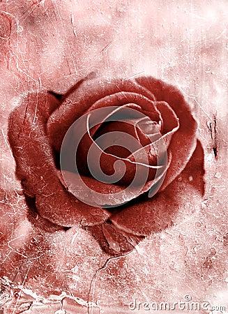Grunge rose 0801