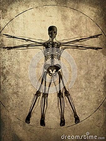 Free Grunge Skeleton Stock Photos - 2849703