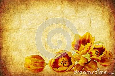 Grunge Tulips