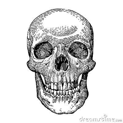 Grunge vector skulls