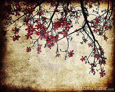 Grungy cherry blossoms