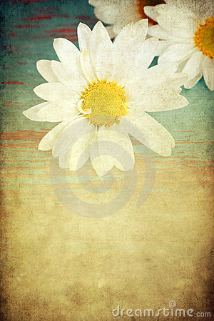 Grungy daisy