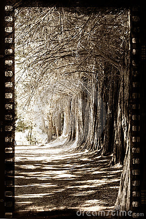 Free Grungy Film With Trees Royalty Free Stock Images - 8473769
