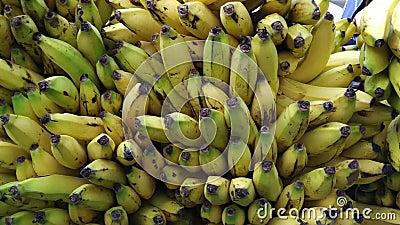 Grupos e grupos das bananas vídeos de arquivo