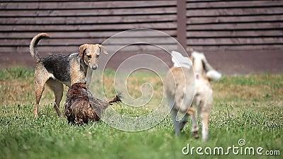 Grupp av hundkapplöpning som spelar i trädgården på ett soligt