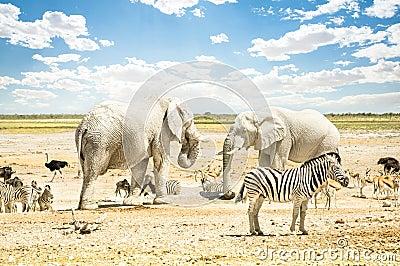 Gruppo di animali misti selvaggi che si rilassano nel for Animali da stagno