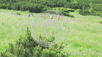 Gruppo di viaggiatori che passano attraverso la foresta uno per uno archivi video