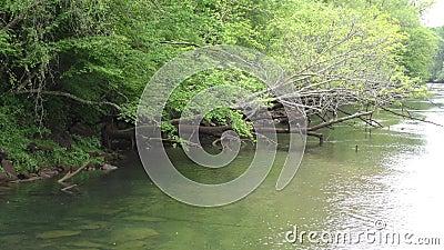 Gruzja, Buford tamy park, A nieżywy drzewny obwieszenie nad Chattahoochee rzeką w i zdjęcie wideo