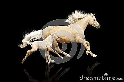 Égua e potro
