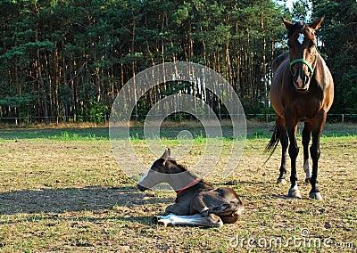 Égua e potro recém-nascido