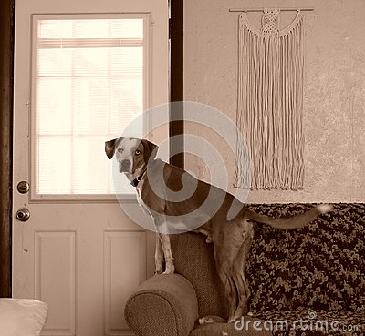 Free Guard Dog Stock Photo - 96194520