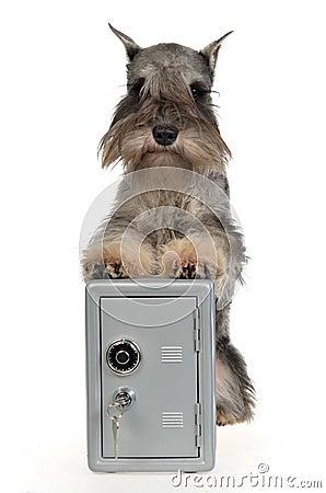 Guard dog with metallic safe