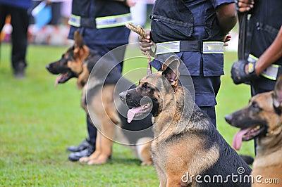 Guard Dogs I