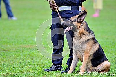 Guard Dogs III