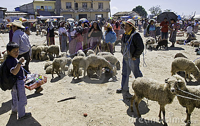 Guatemala - cattle market Editorial Image
