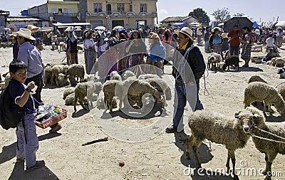 Guatemala - cattle market Editorial Image