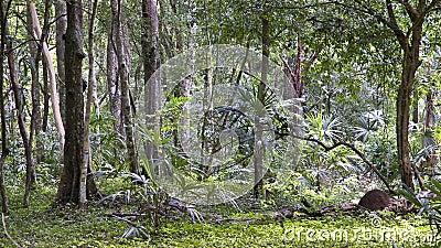 Guatemala - jungle