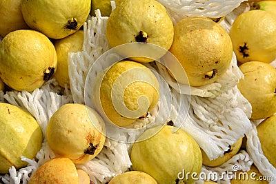 Guave im Gelb