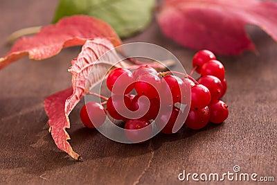 Guelder berries