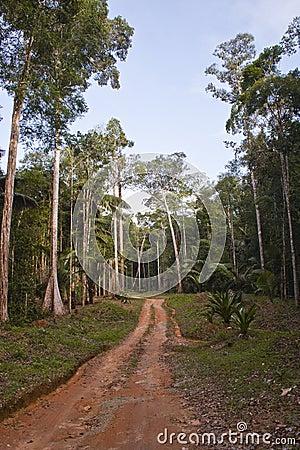 Guiana path