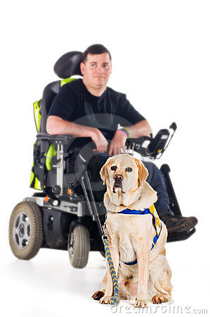 Free Guide Dog Stock Photography - 8433342