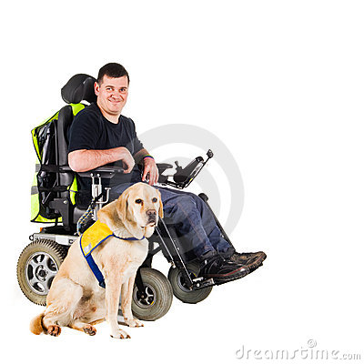 Free Guide Dog Royalty Free Stock Photography - 8433357