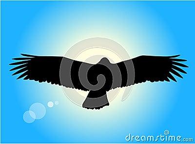 Águila del vuelo