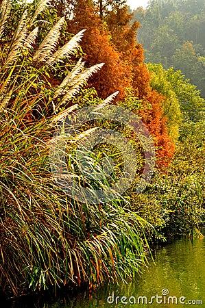 Guilin Landscape 011