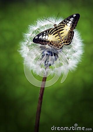 Guindineau sur la fleur