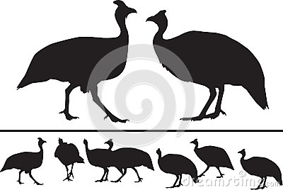 Guinea fowl silhouettes