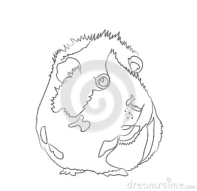 Free Guinea Pig, Lines, Vector Stock Photography - 120582232