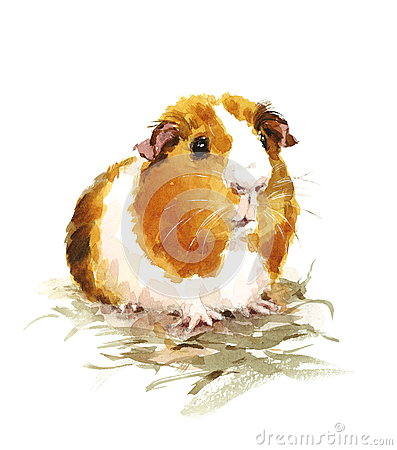 Free Guinea Pig Watercolor Pets Animals Illustration Hand Painted Stock Image - 76619811