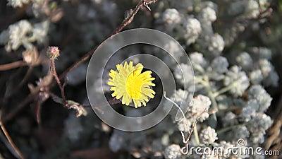 Gul blomma på marken