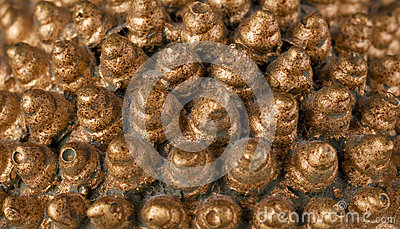 Guld- kottar