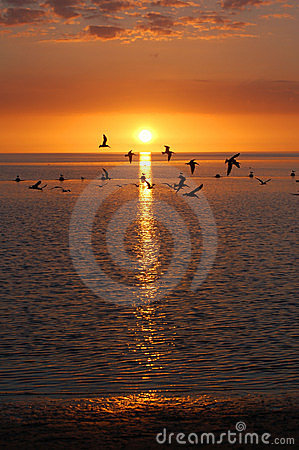 Free Gulf Beach Stock Image - 10789021