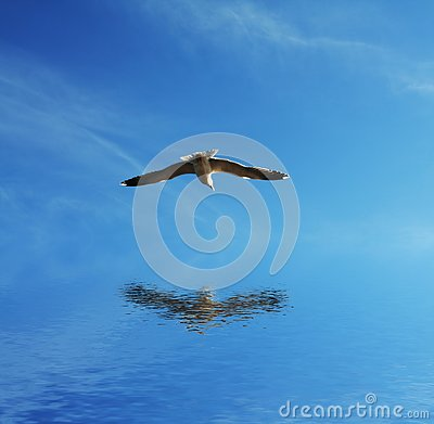 Free Gull Royalty Free Stock Photo - 4312075