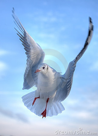 Free Gull Royalty Free Stock Photo - 7720605