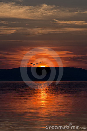 Free Gull And Sunset Royalty Free Stock Images - 22797059