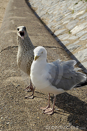 Free Gull And Young Stock Photo - 1172430