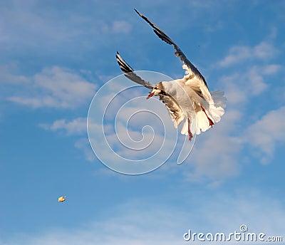 Gull and Breadcrumb