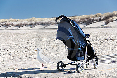 Gull with buggy