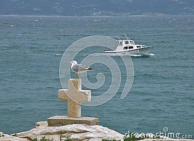 Gull and croos at sea
