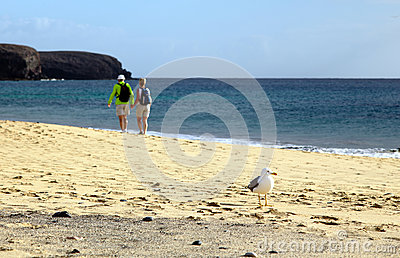Gull at the seashore