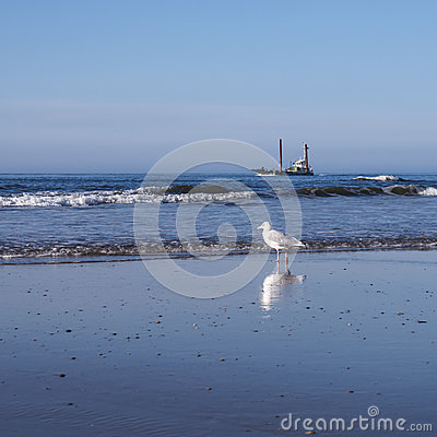 Gull and ship at the beach